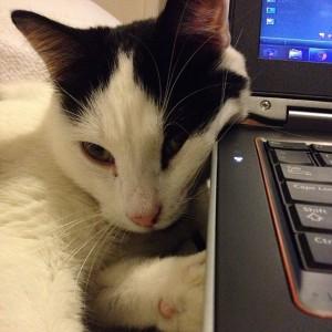calvin.computer